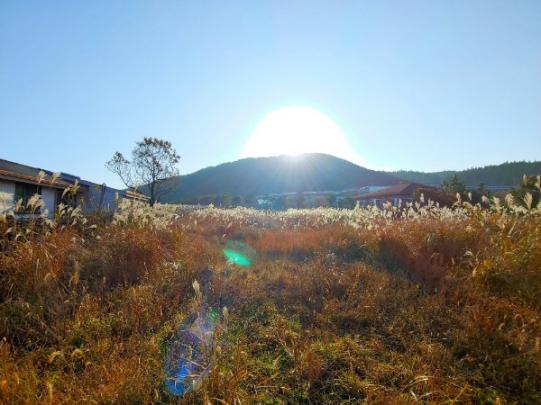 유네스코 세계유산 거문오름, 제주세계자연유산센터 인근 임야입니다. 사진정보