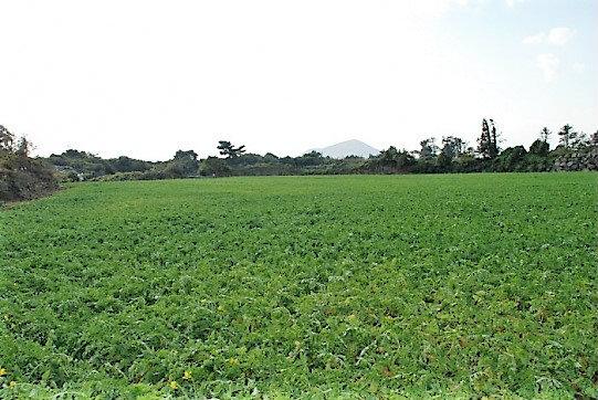 상도리 제주크린푸드 인근 토지이며 2필지로 이루어진 맹지입니다. 사진정보