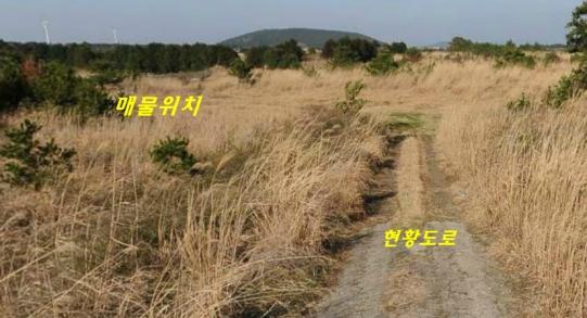 난산리 현항도로 있는 맹지 임야 사진정보