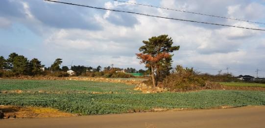 용당리 마을안에 있는 전원주택 부지 사진정보