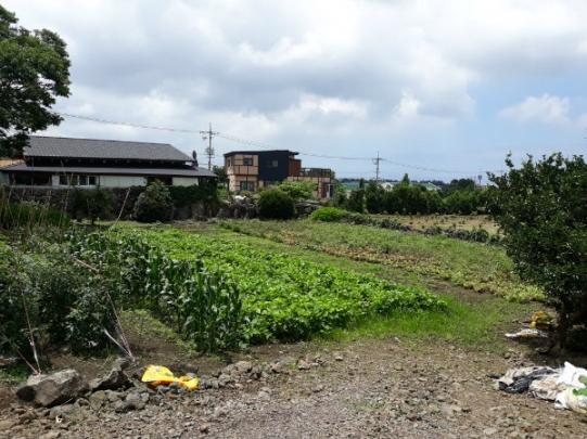 선흘 동백동산인근 전원주택지 290py 사진정보