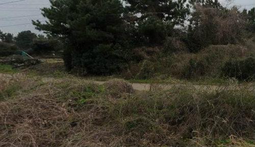 토지 사진정보